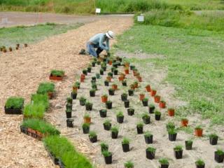 Planting at the Terra Nova Pollinator Meadow
