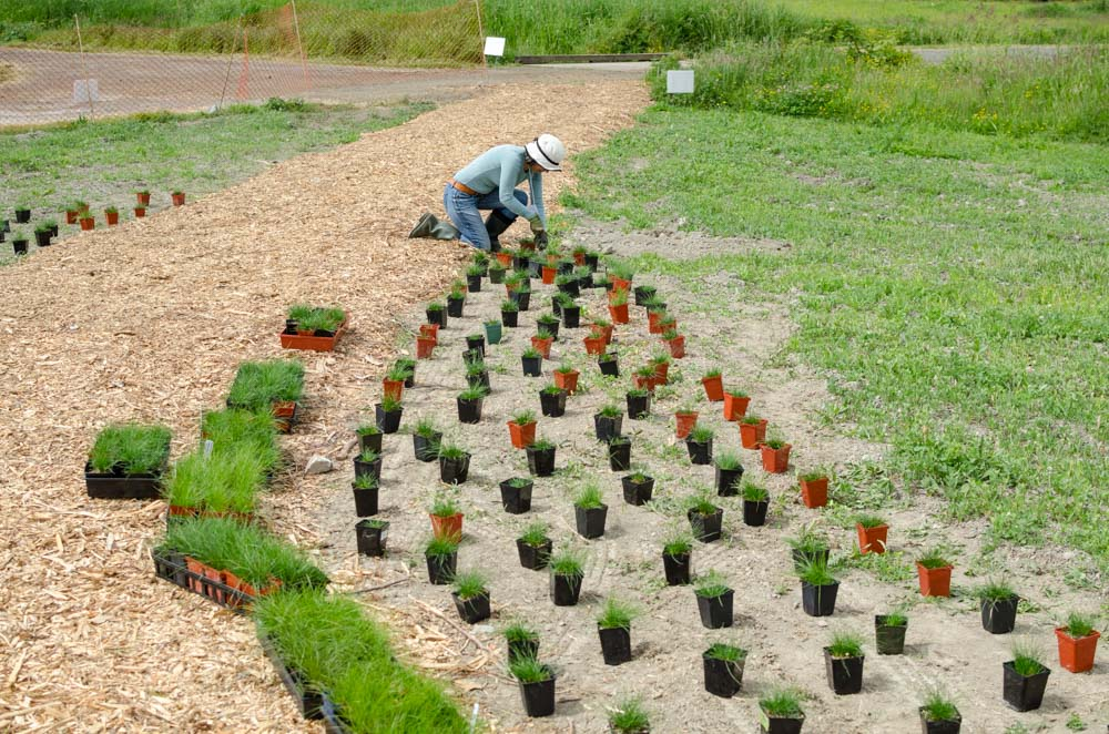 Planting at the Terra Nova Pollinator Meadow