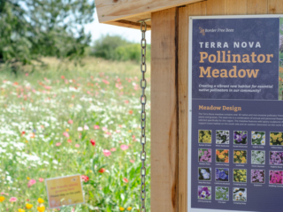 The didactic apiary at the Terra Nova Pollinator Meadow