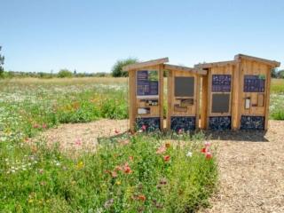 The pollinator apiary at the Terra Nova Pollinator Meadow