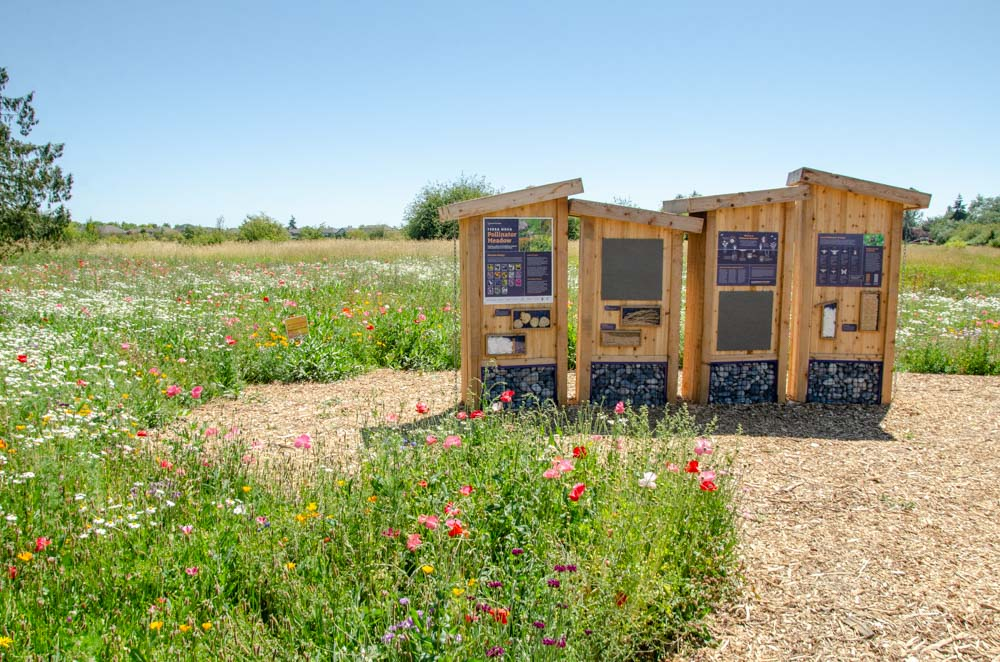 The pollinator apiary at the Terra Nova Pollinator Meadow